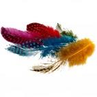 Pióra perlicze kolorowe